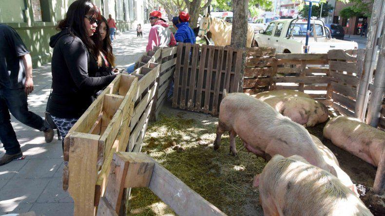 Productores armaron una granja en Casa de Gobierno para protestar