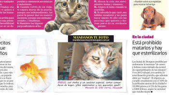 Mandanos la foto de tu mascota a mundomascota@lmneuquen.com.ar.
