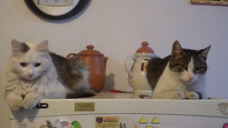 Bella y Cielo. Son mis amores y les gusta subirse a la heladera. Vivimos sobre Winter
