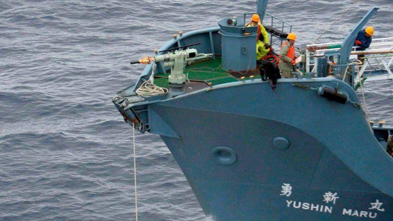 Un buque ballenero japonés en plena tarea.