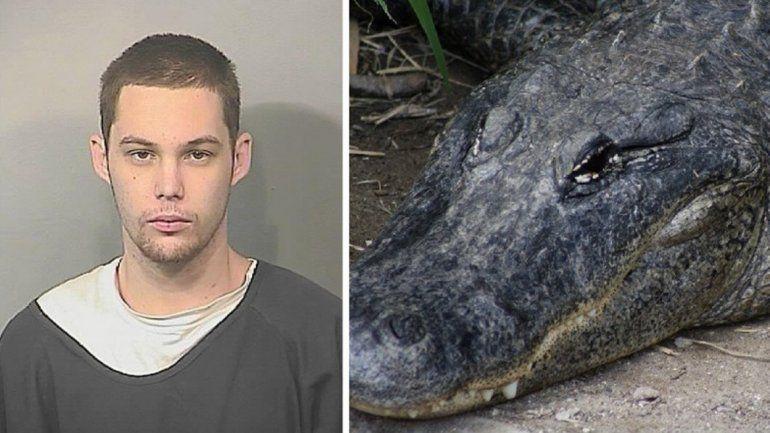 Un ladrón escapó de la Policía, se tiró a un pantano y se lo comió un cocodrilo
