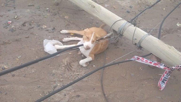 El poste permaneció en el piso varias horas y un perro terminó muerto.