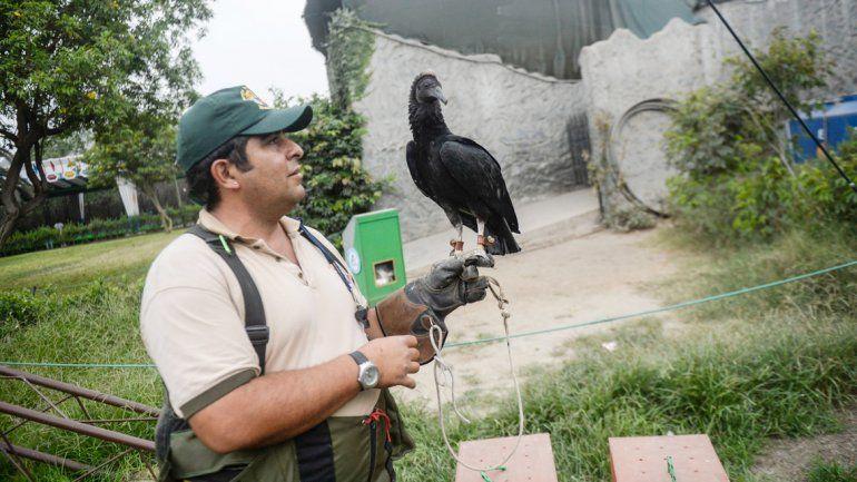 Las aves carroñeras son aliadas de la ecología. Colaboran monitoreando la calidad del ambiente.