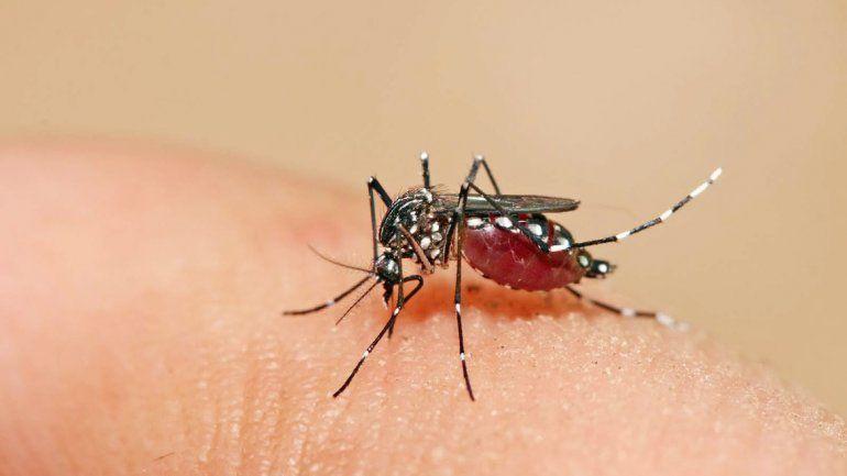 El mosquito en la Patagonia no se puede desarrollar