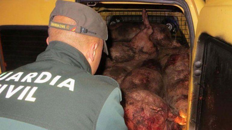 Investigan en España a dos jóvenes por matar más de 70 cerdos por diversión