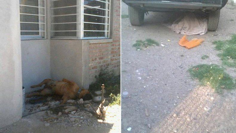 Denuncian a dos vecinos por irse de vacaciones y dejar morir a sus perros