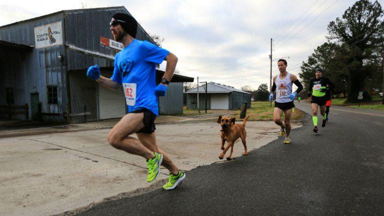 Una perra se prendió en una maratón y terminó séptima