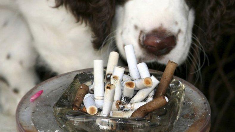 El humo de cigarrillo también puede causar cáncer en las mascotas