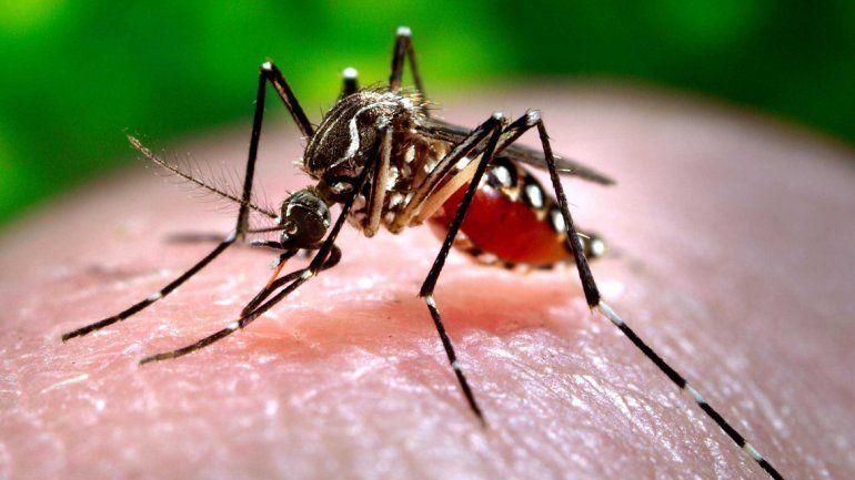 Aconsejan usar repelentes en áreas afectadas por la transmisión del virus.