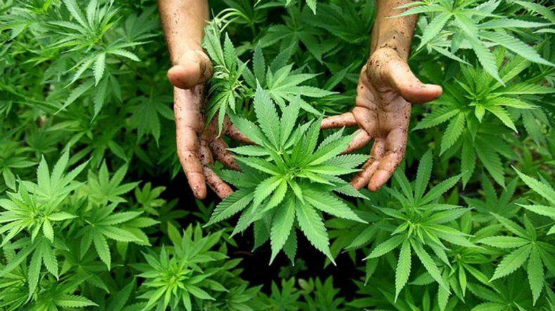 Autorizan el uso de medicamentos hechos con marihuana