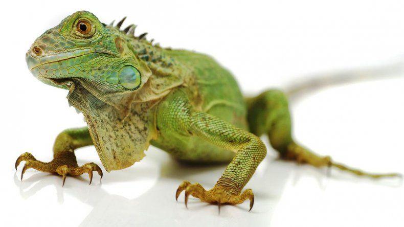 La moda de los animales exóticos afecta a varias especies.