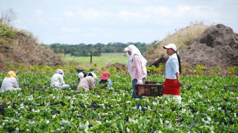Más de la mitad del terreno cultivable todavía está en manos masculinas.