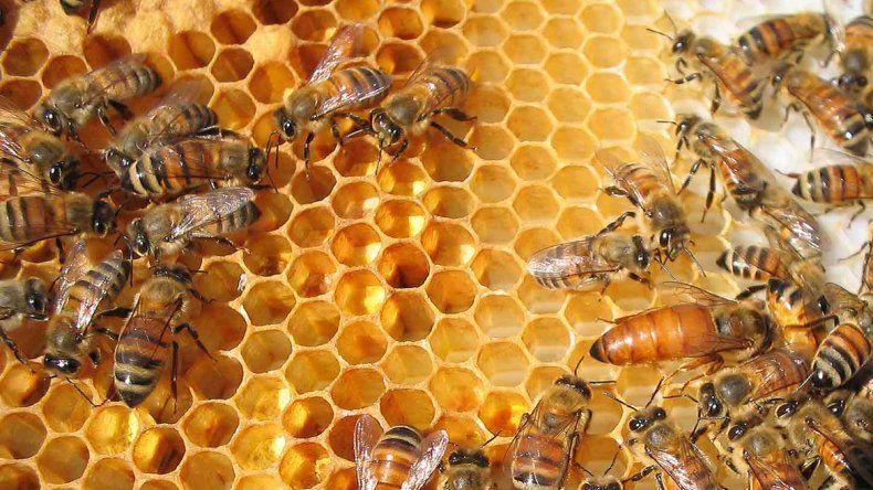 Una miel neuquina se consagró en un concurso internacional