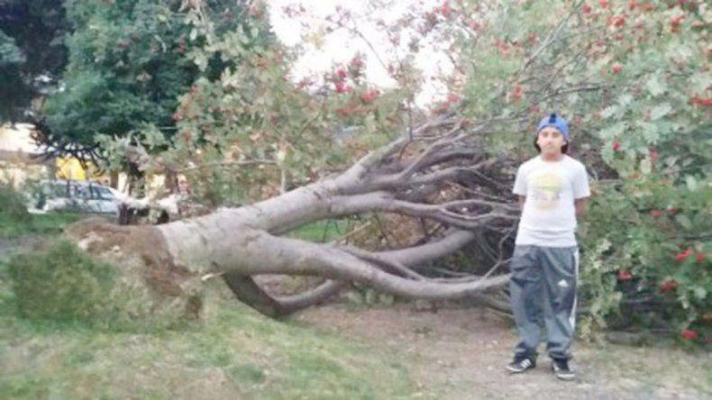 Facundo junto al árbol que casi causa otra tragedia en San Martín.