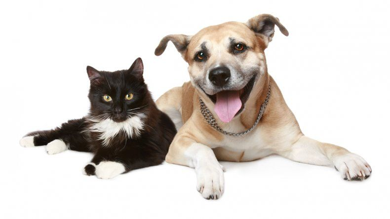Se trate de perros o de gatos