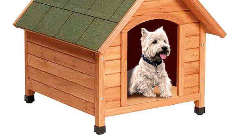 A algunos no les gusta que sus mascotas anden por la casa. ¿Qué hacer con el frío?