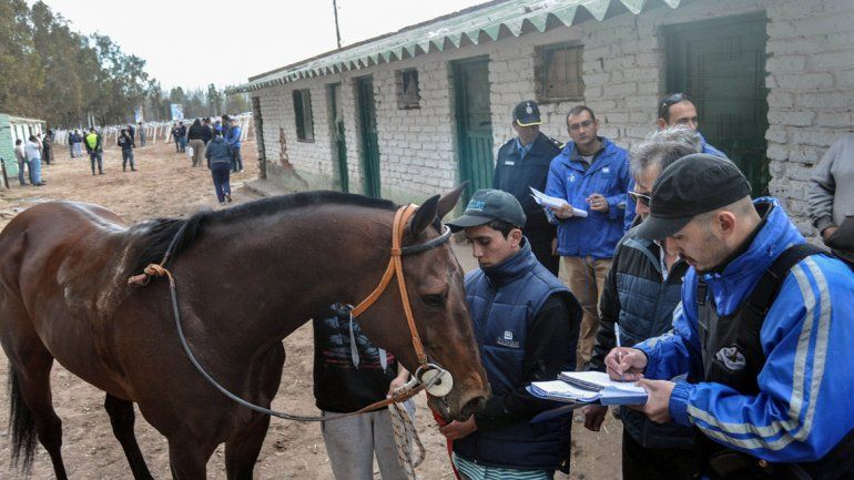 Los caballos tenían sustancias prohibidas por la ley antidopaje.