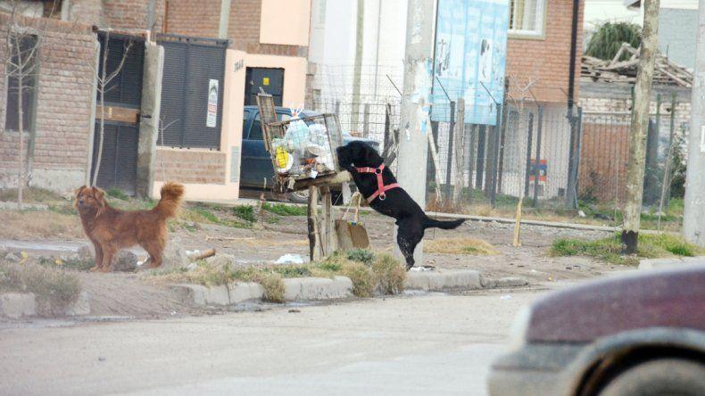 Muchos perros que tienen dueños son liberados durante gran parte del día; ahí es cuando se producen accidentes.