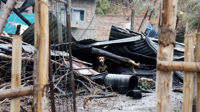Un perro se refugia de la lluvia en las ruinas de la casa incendiada.