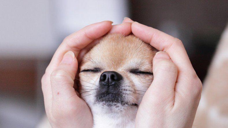 Hay una nueva tendencia de acudir a terapias complementarias para tratar a las mascotas.