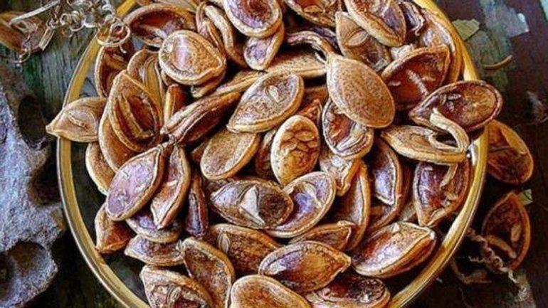 Las semillas tenían una antigüedad de 800 años.
