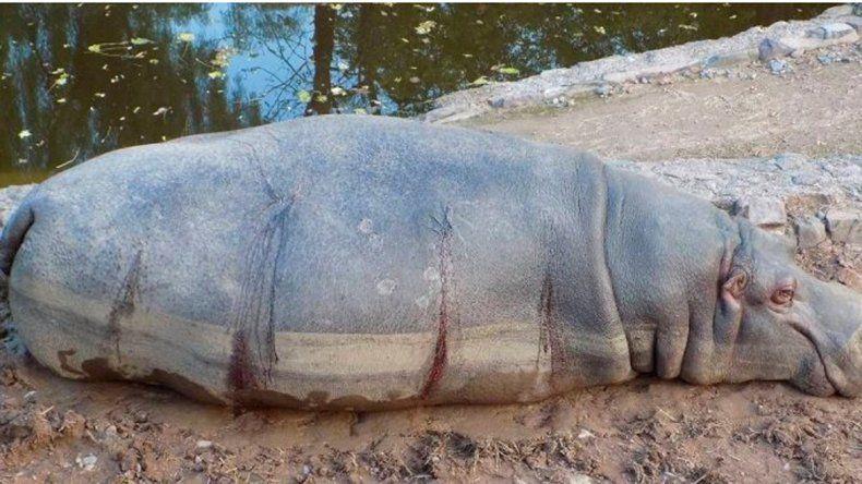 Suman 70 las muertes en el Zoo de Mendoza