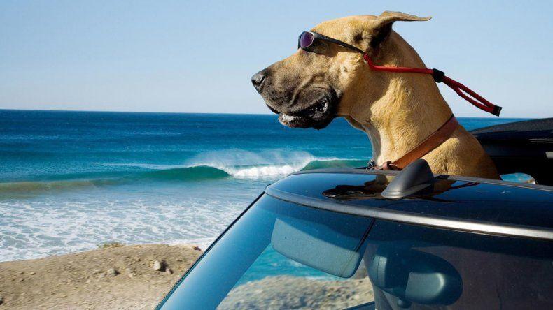 Las mascotas en las vacaciones