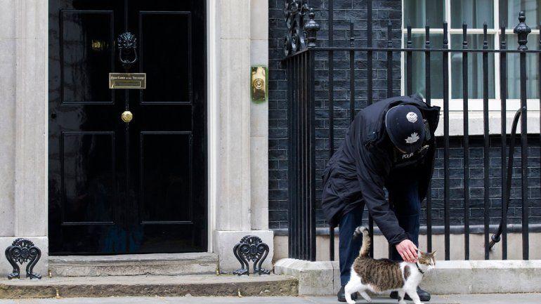El gato Larry trabaja para el gobierno británico desde el 2011. Su eficacia y carisma lo convirtieron en emblema.