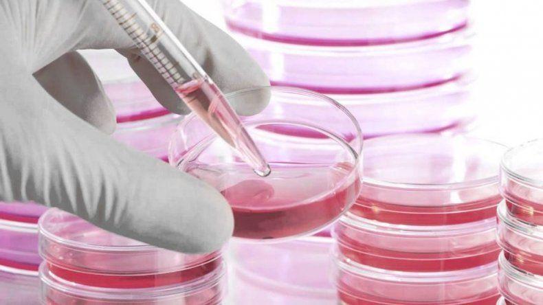 Las células madre permiten la pronta recuperación de lesiones.