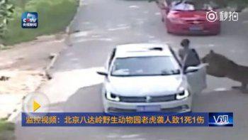 Una mujer murió atacada por tigres en un safari en China