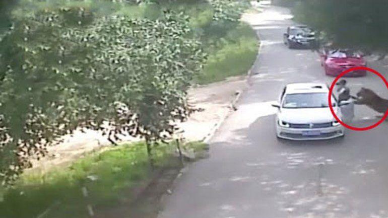 El animal salvaje atacó a la primera mujer que se bajó del auto. La otra