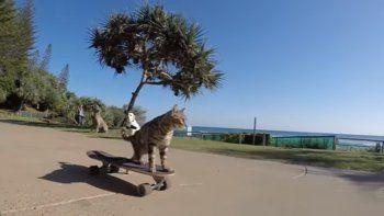 ¿Quién dijo que los gatos no pueden andar en skate?