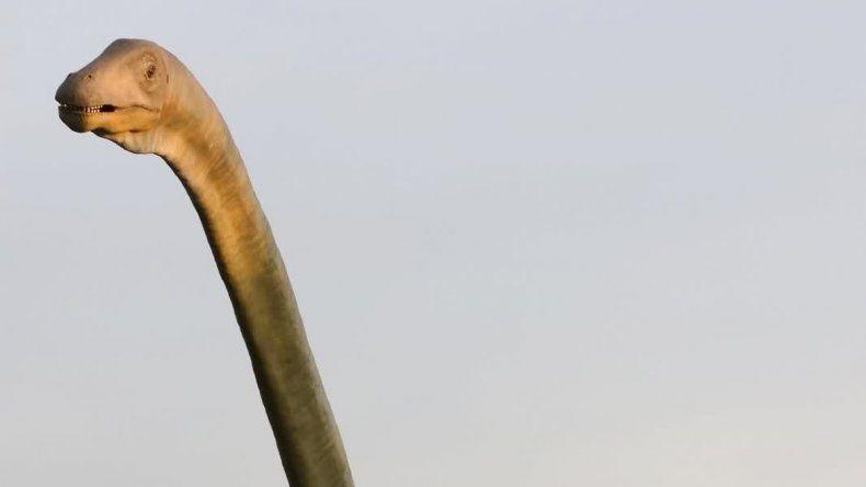 La carne roja de las especies de cuello largo sería la más rica.