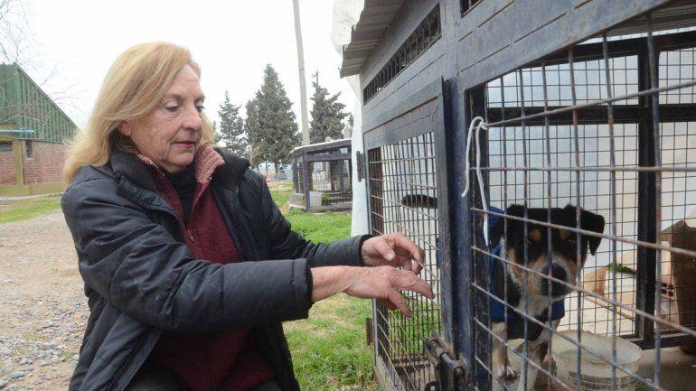 La adopción de una mascota podría ser considerada como una acción voluntaria para acceder al régimen.