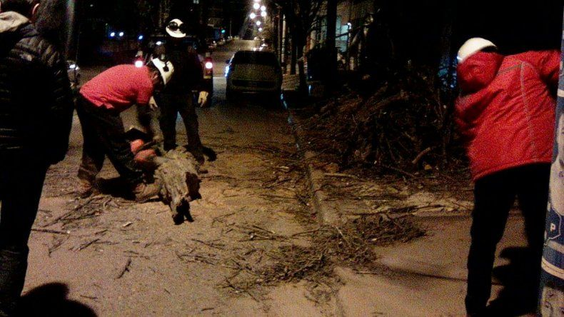Por el fuerte viento, otro árbol cayó e interrumpió el tránsito
