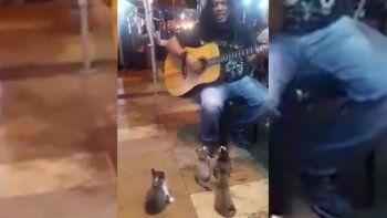 Músico callejero cautiva a cuatro gatitos con su guitarra
