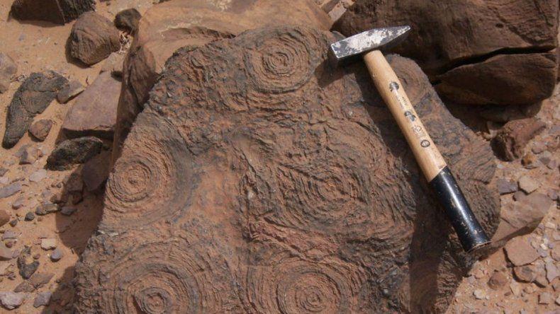Los restos tienen 3700 millones de años y estaban en las rocas de Isua.