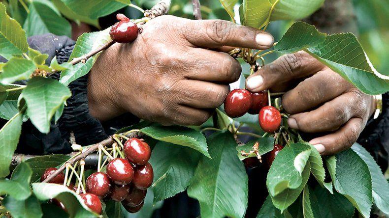 Insólito: ofrecen trabajo en la fruta y nadie lo quiere