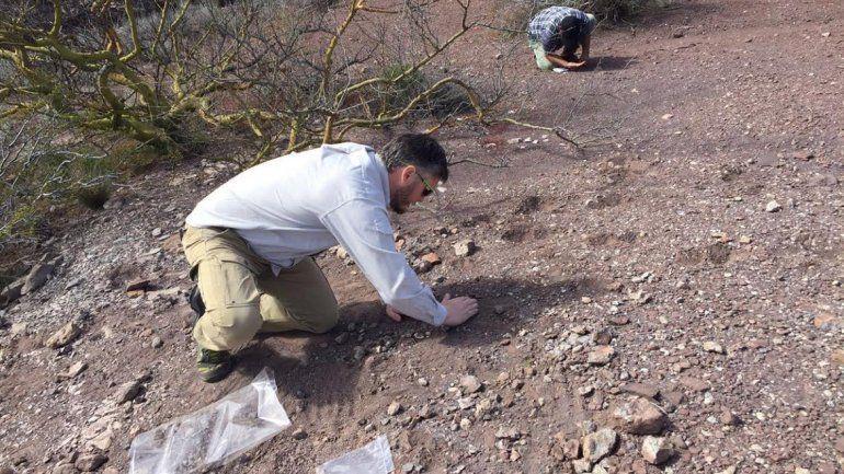 Hallaron importantes restos fósiles de anfibios en Añelo