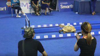 la liebre vs. la tortuga: mira quien gano la carrera