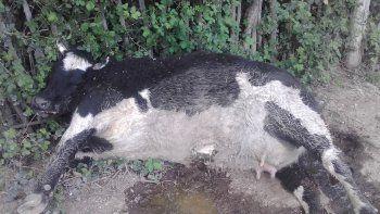 Los cuatro animales aparecieron muertos luego de que su dueño las moviera a un sector de la chacra lindante con la del vecino, donde al parecer pastaron.