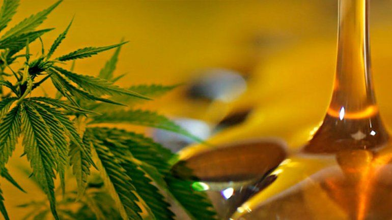 El aceite de cannabis se consigue en varios países que habilitaron su uso para enfermedades como fibromialgia. Chile es uno y en la región hay contrabando.