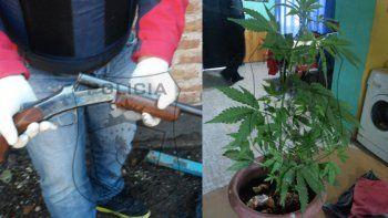 secuestran armas y plantas de marihuana: un detenido
