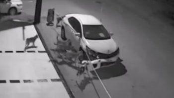 una jauria destrozo un auto en turquia
