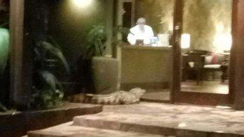 aparecio un yacare en un hotel y causo panico