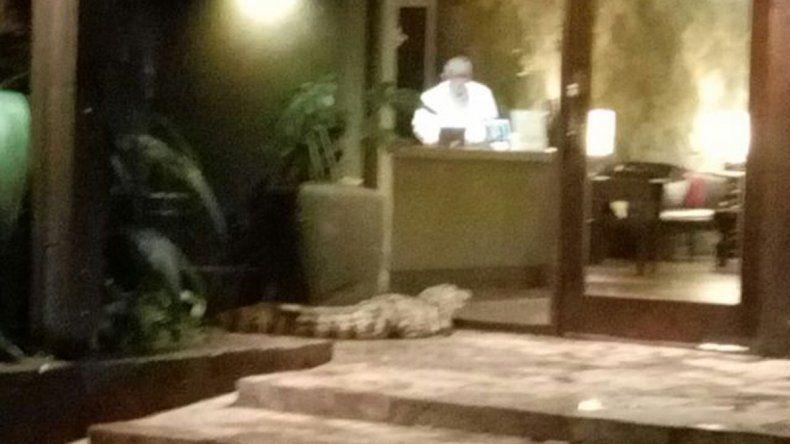 Apareció un yacaré en un hotel y causó pánico