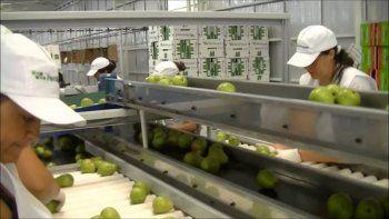 El gremio de los empacadores es el más numeroso de la fruticultura, con casi 15.000 afiliados.