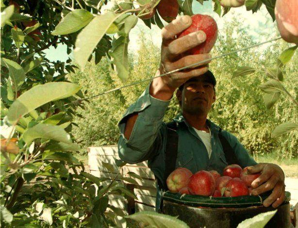 El Banco Nación impulsa créditos por $800 millones para productores del Alto Valle