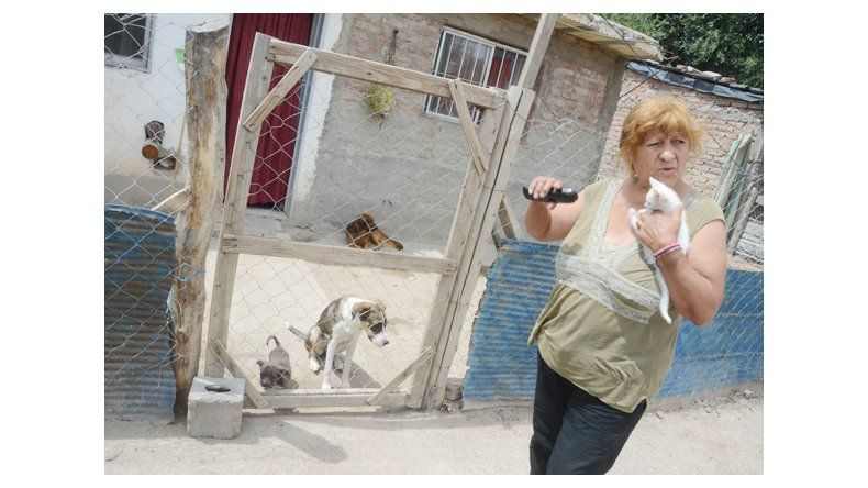 Alarma por envenenamiento de 9 animales en Valentina