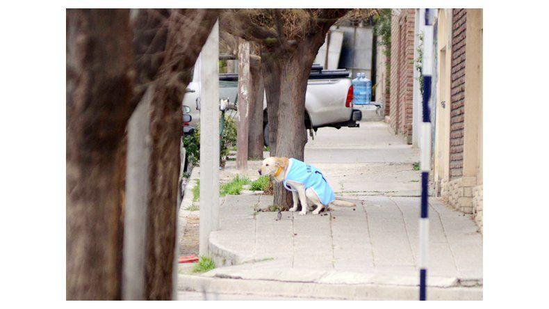 Por día, un vecino es denunciado por no cuidar a su mascota